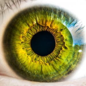 Eye tracking system created by KTU student will be used in scientific experiments